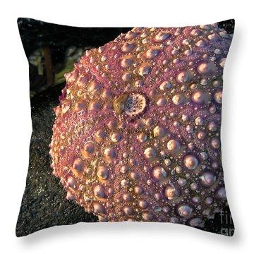 Sea Urchins Throw Pillow by Robert Bales