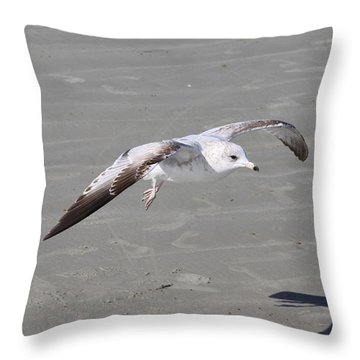 Seagull Throw Pillow by Chris Thomas