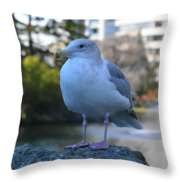 Seagull In Beacon Hill Park Victoria Bc Throw Pillow by Lawrence Christopher