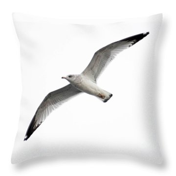 Seagull In Flight Throw Pillow