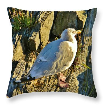 Seagull In Shadow Throw Pillow by Jean Goodwin Brooks