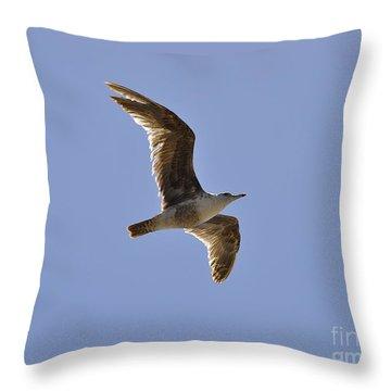 Seagull N Light  Throw Pillow