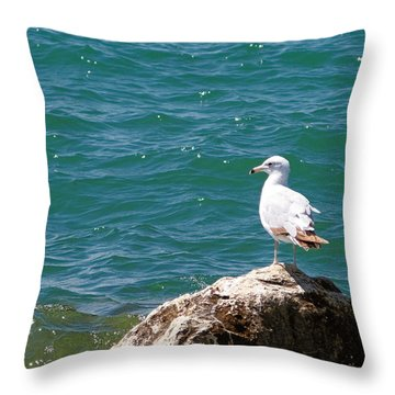 Seagull On Rock Throw Pillow