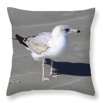 Seagull On The Hunt Throw Pillow by Chris Thomas