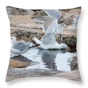 Seagull Swimming Pool - Acadia Throw Pillow