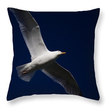 Seagull Underglow Throw Pillow