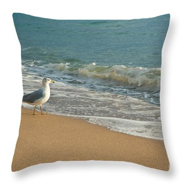Seagull Walking On A Beach Throw Pillow by Sharon Dominick