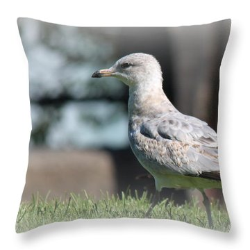 Seagulls 1 Throw Pillow