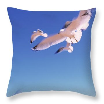 Seagulls Flying Along Route A1a Throw Pillow