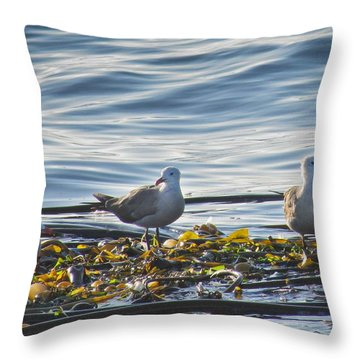 Seagulls In Victoria Bc Throw Pillow