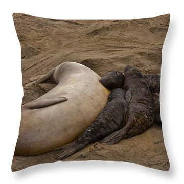 Seal And Pups Throw Pillow