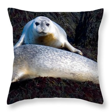 Seal Massage 5662 Throw Pillow by Brent L Ander