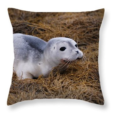 Seal Pup Throw Pillow by DejaVu Designs