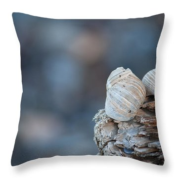 Seashells On Driftwood  Throw Pillow by Brian Boudreau