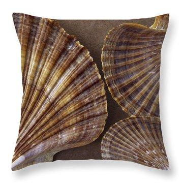 Seashells Spectacular No 7 Throw Pillow