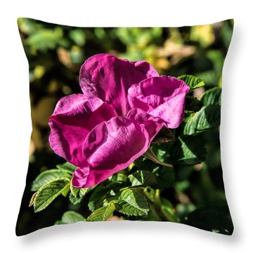 Seasons Last Rose Throw Pillow by Leif Sohlman