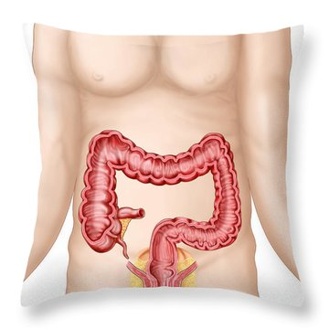 Sectional View Of Large Intestine Throw Pillow by Stocktrek Images