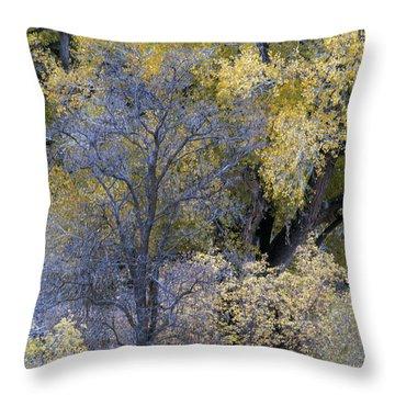Sedona Fall Color Throw Pillow