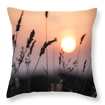 Seed Heads At Sunset Throw Pillow