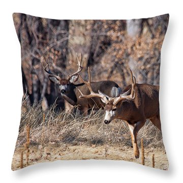 Throw Pillow featuring the photograph Seeing Double by Jim Garrison