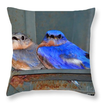 Seeking Shelter Throw Pillow by Al Powell Photography USA