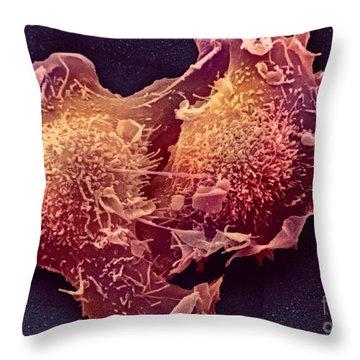 Sem Of Mitosis Throw Pillow