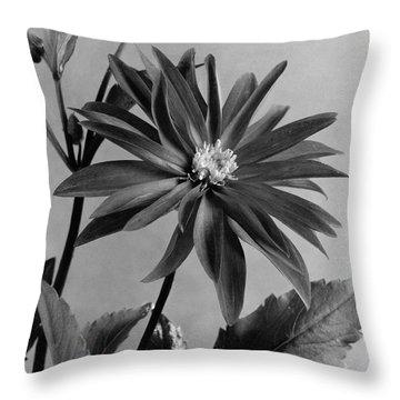 Semi-double Dwarf Pigmy Dahlia Flower Throw Pillow