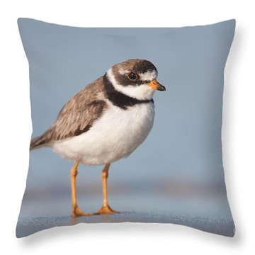 Semipalmated Plover Throw Pillow by Clarence Holmes