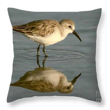 Semipalmated Sandpiper Throw Pillow by Myrna Bradshaw