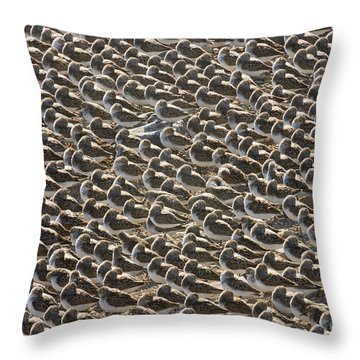 Semipalmated Sandpipers Sleeping Throw Pillow by Yva Momatiuk John Eastcott