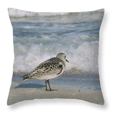 Semiplated Sandpiper Throw Pillow
