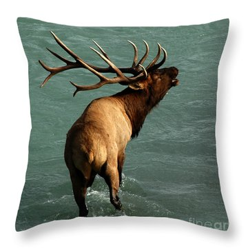 Sending A Challenge Throw Pillow by Vivian Christopher