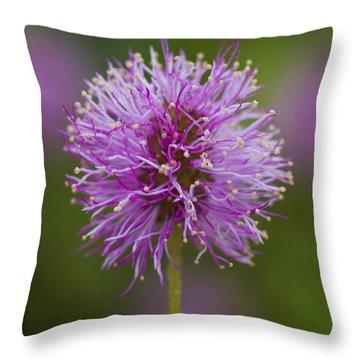 Sensitive Briar Flower Globe Throw Pillow