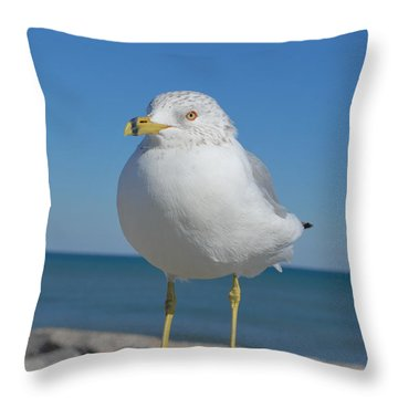 Throw Pillow featuring the photograph Ring-nosed Gull by Bob Sample