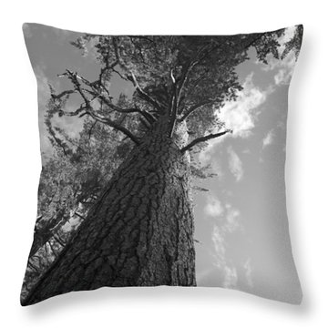 Throw Pillow featuring the photograph Sequoia Tree by Ivete Basso Photography