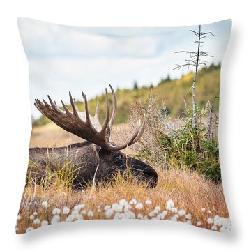 Throw Pillow featuring the photograph Serious Lady-watching by Tim Newton