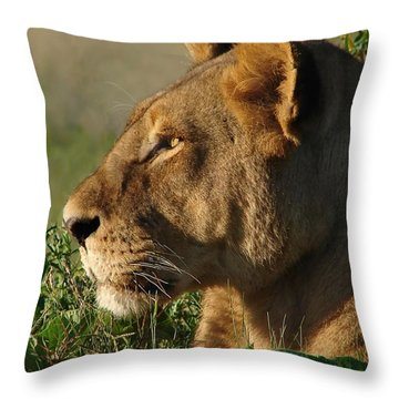 Serious Lioness Throw Pillow