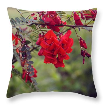 Sesbania Punicea Throw Pillow by Kim Pate
