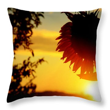 Throw Pillow featuring the photograph Setting Sunflower by Aurelio Zucco