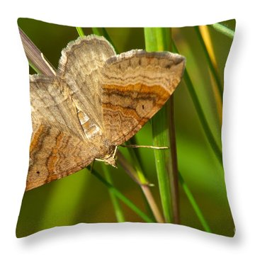 Shaded Broad-bar Butterfly Throw Pillow