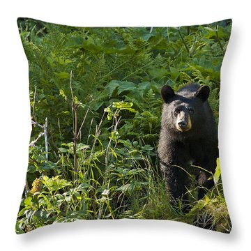 All Ears Throw Pillow by Ted Raynor