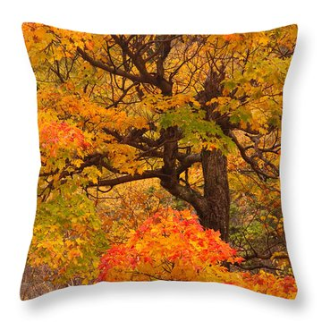 Shapely Maple Tree Throw Pillow