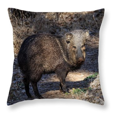 Sharing The Trail Throw Pillow