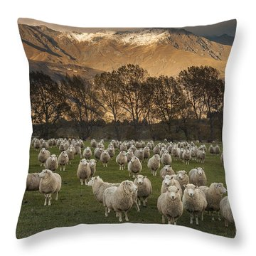 Throw Pillow featuring the photograph Sheep Flock At Dawn Arrowtown Otago New by Colin Monteath, Hedgehog House
