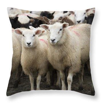 Sheep In A Farm Yard Throw Pillow