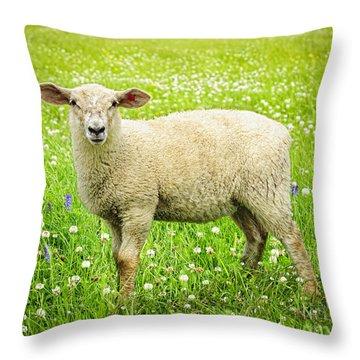 Sheep In Summer Meadow Throw Pillow