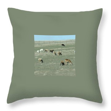 Sheep Throw Pillows