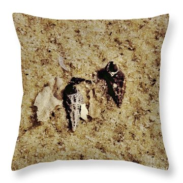Throw Pillow featuring the photograph Shells I by Cassandra Buckley