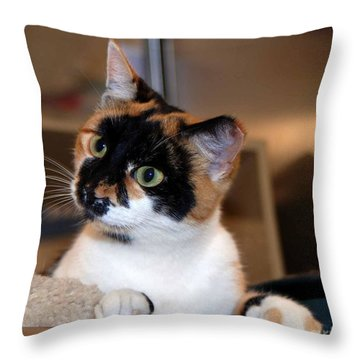 Shelter Cats Are The Best Throw Pillow
