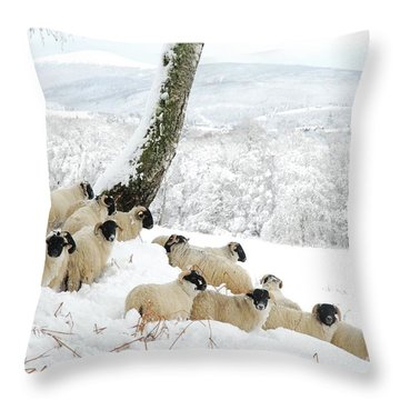 Sheltering Flock Throw Pillow by John Kelly